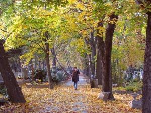 autumn-78825_640