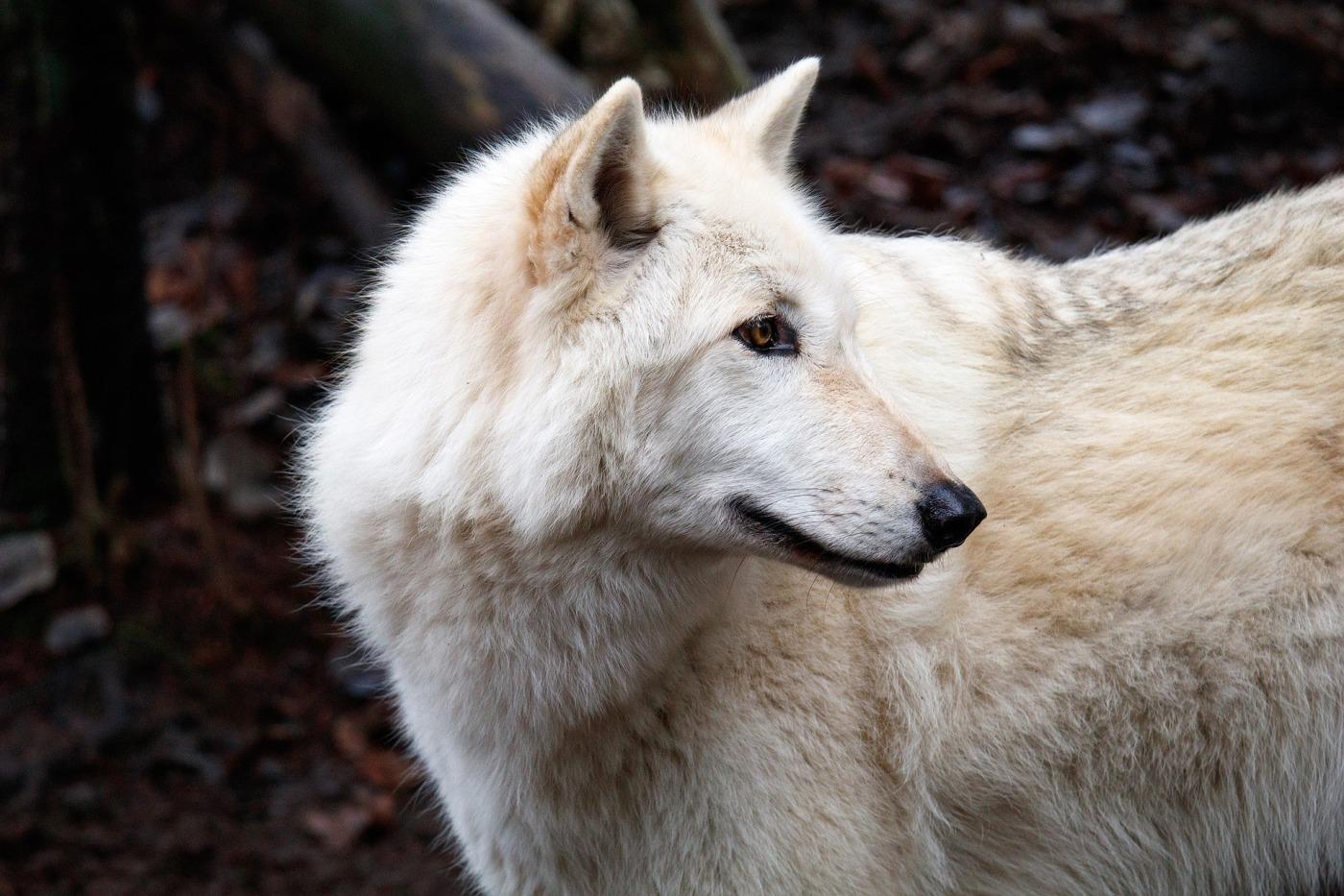 #Wildlife - TopicsWithPassion.blog