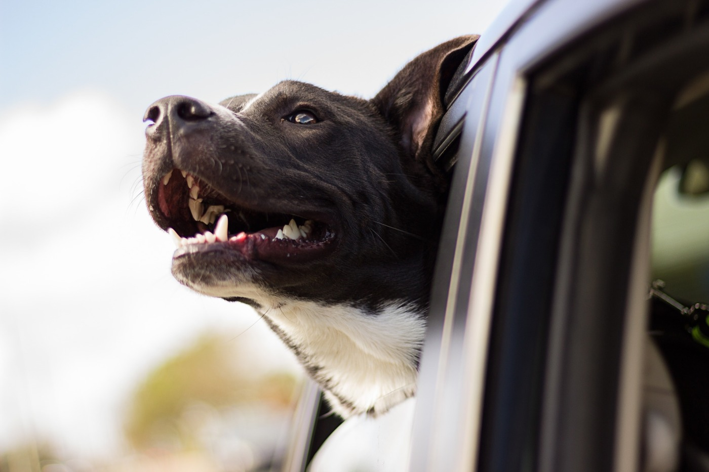 Don't leave your #pets in the car