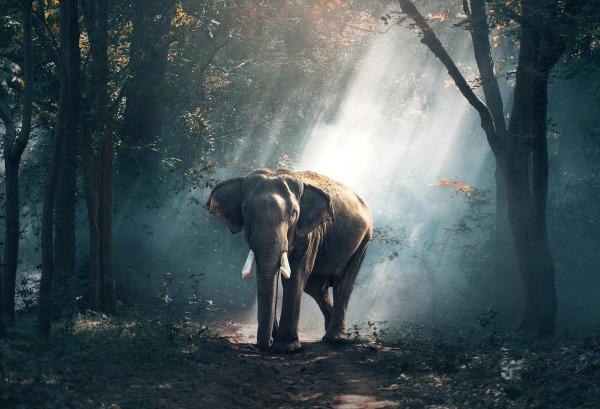 Wildlife - TopicsWithPassion.blog